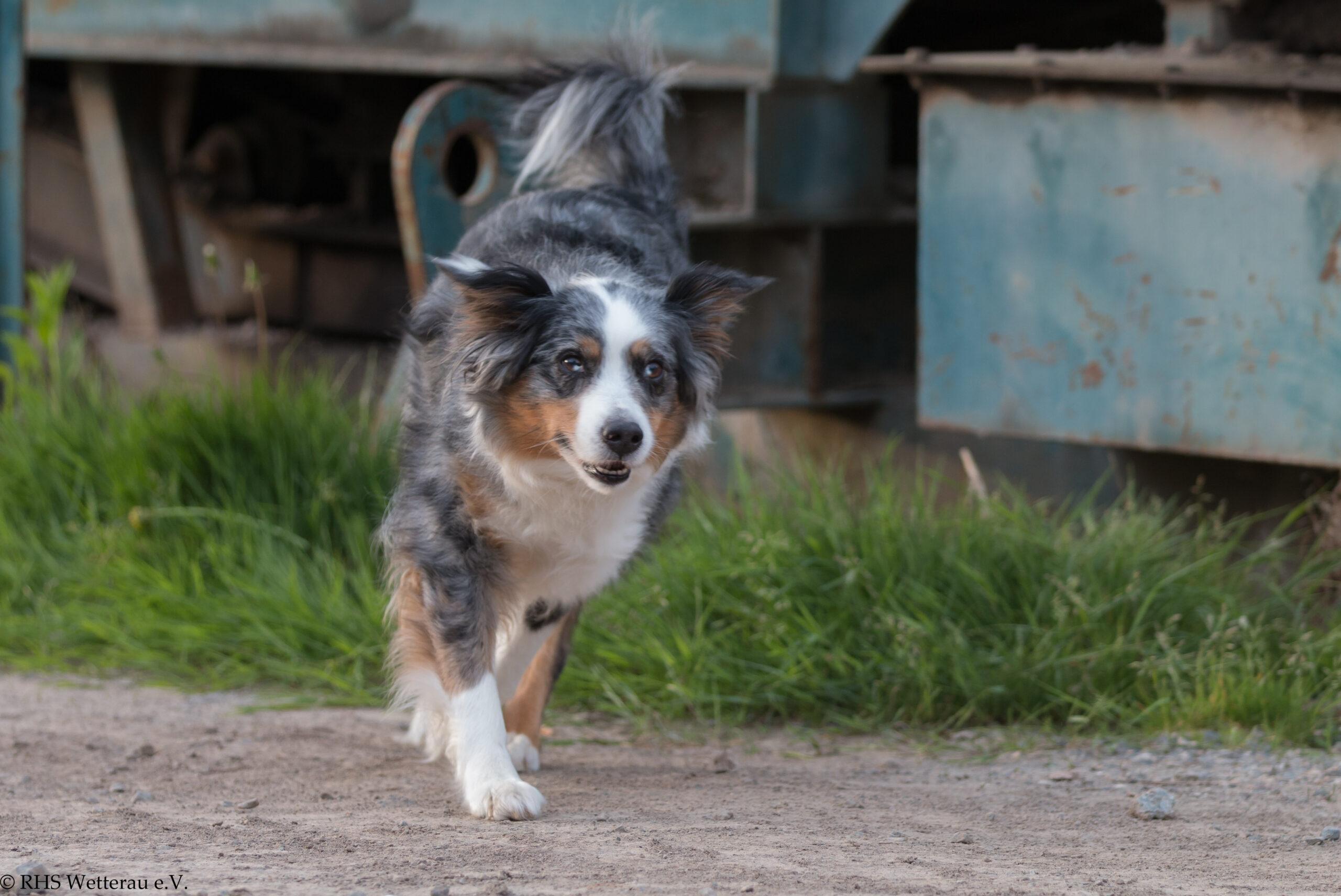 Rettungshundestaffel Wetterau e.V.